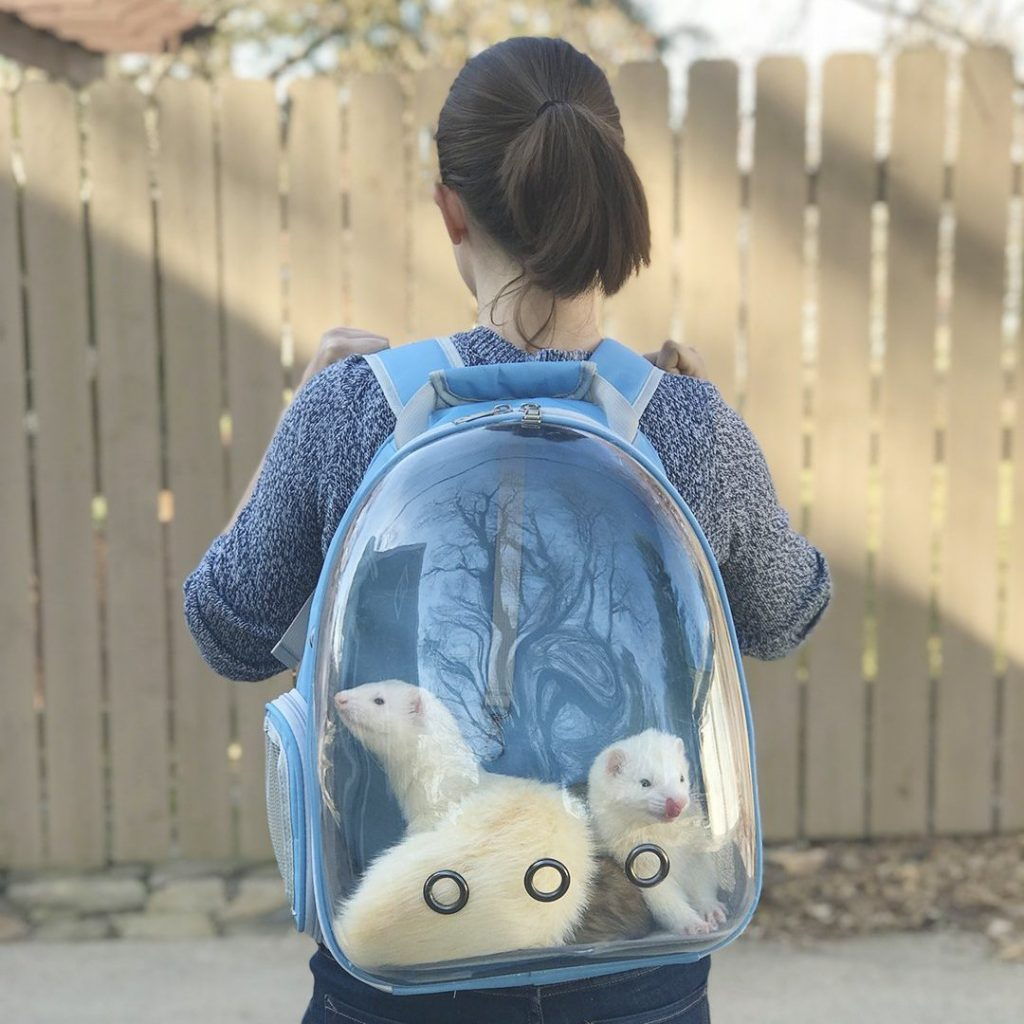 ferret bubble backpack