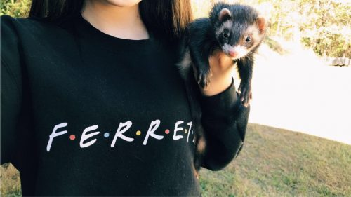 Ferret 'Friends' Sweatshirt photo review