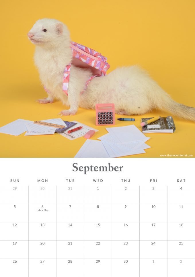 Ferret Calendar in backpack