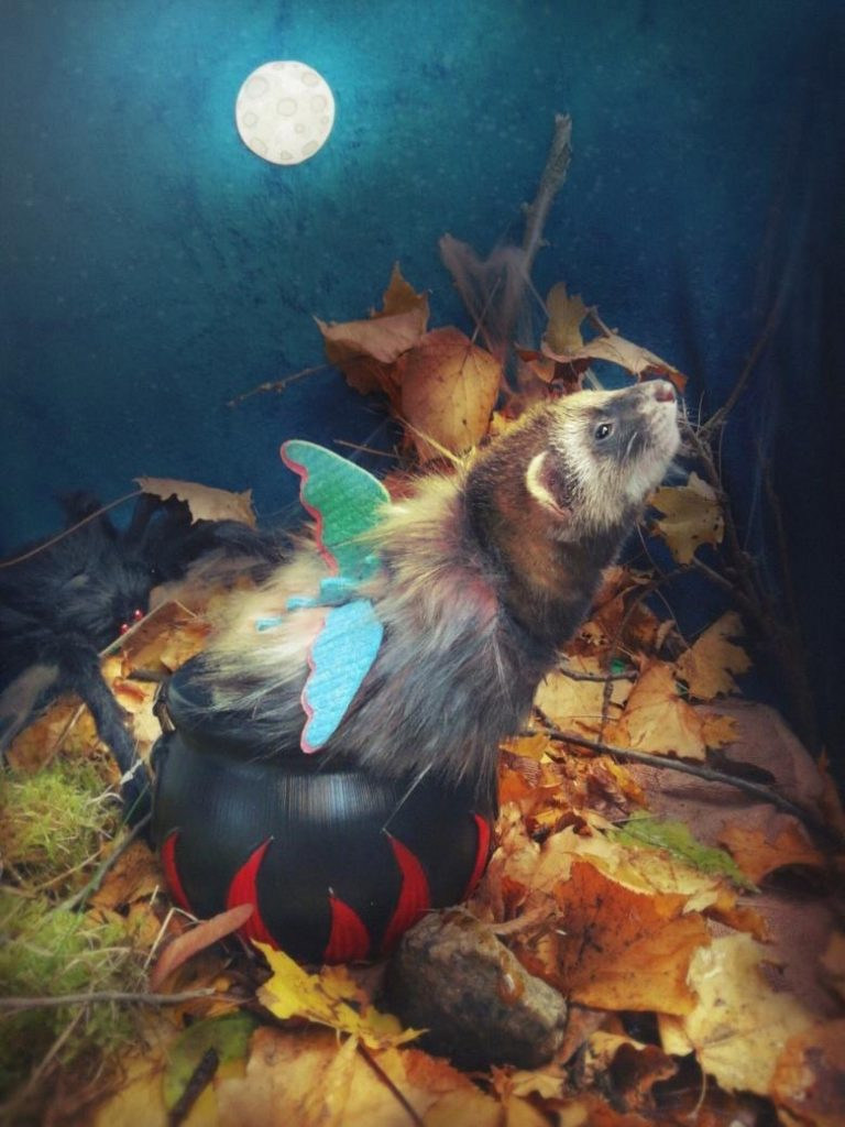 best ferret halloween costume