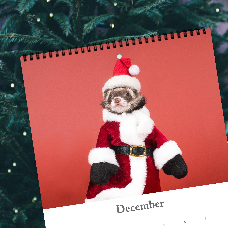 GIANT Ferret Calendar 2020 (Pre-Order)