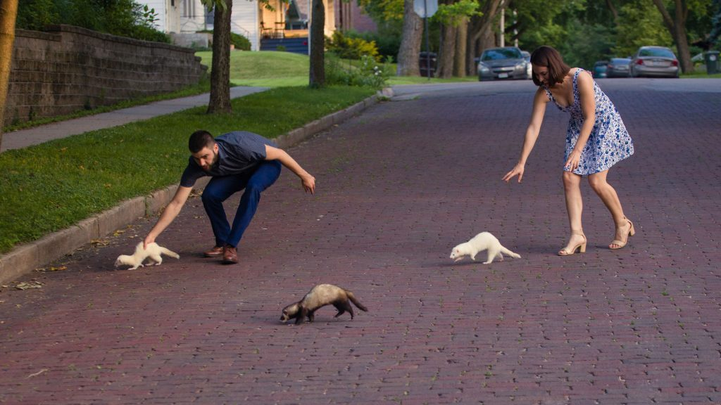 ferrets running away during ferret engagement photos