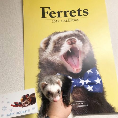 2021 Official Ferret Calendar photo review