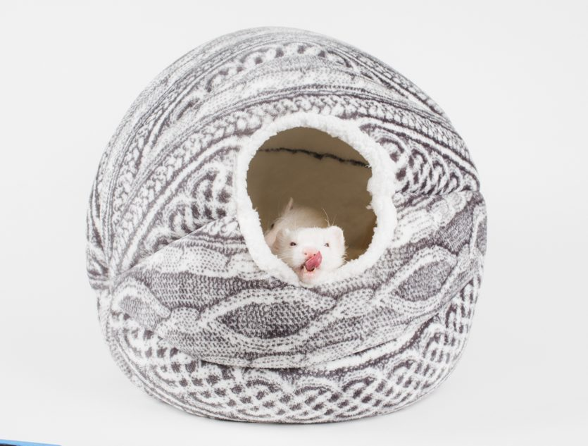 ferret in sleep cocoon