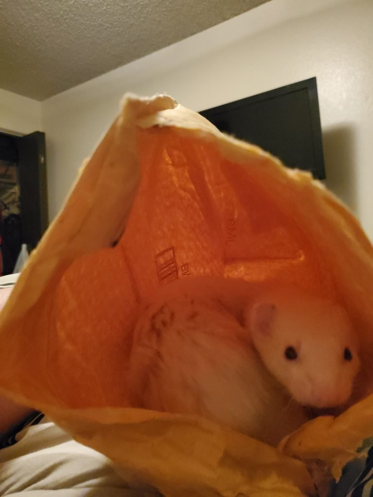cute ferret in bag