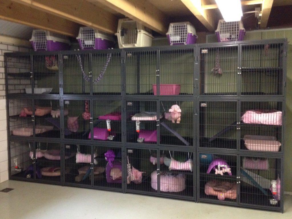 best ferret cage ideas
