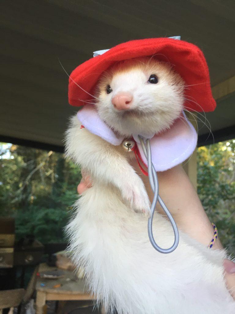 cute-ferret-outfit