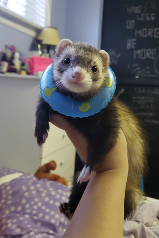 cute-ferret-floatie