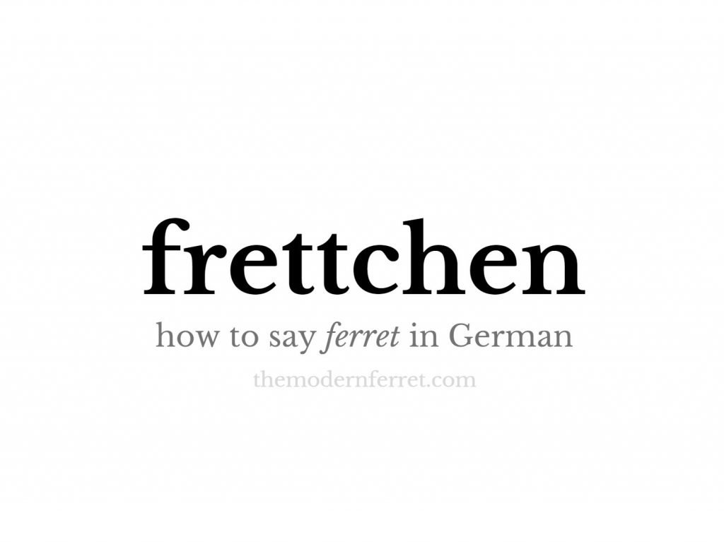 how to say ferret in german