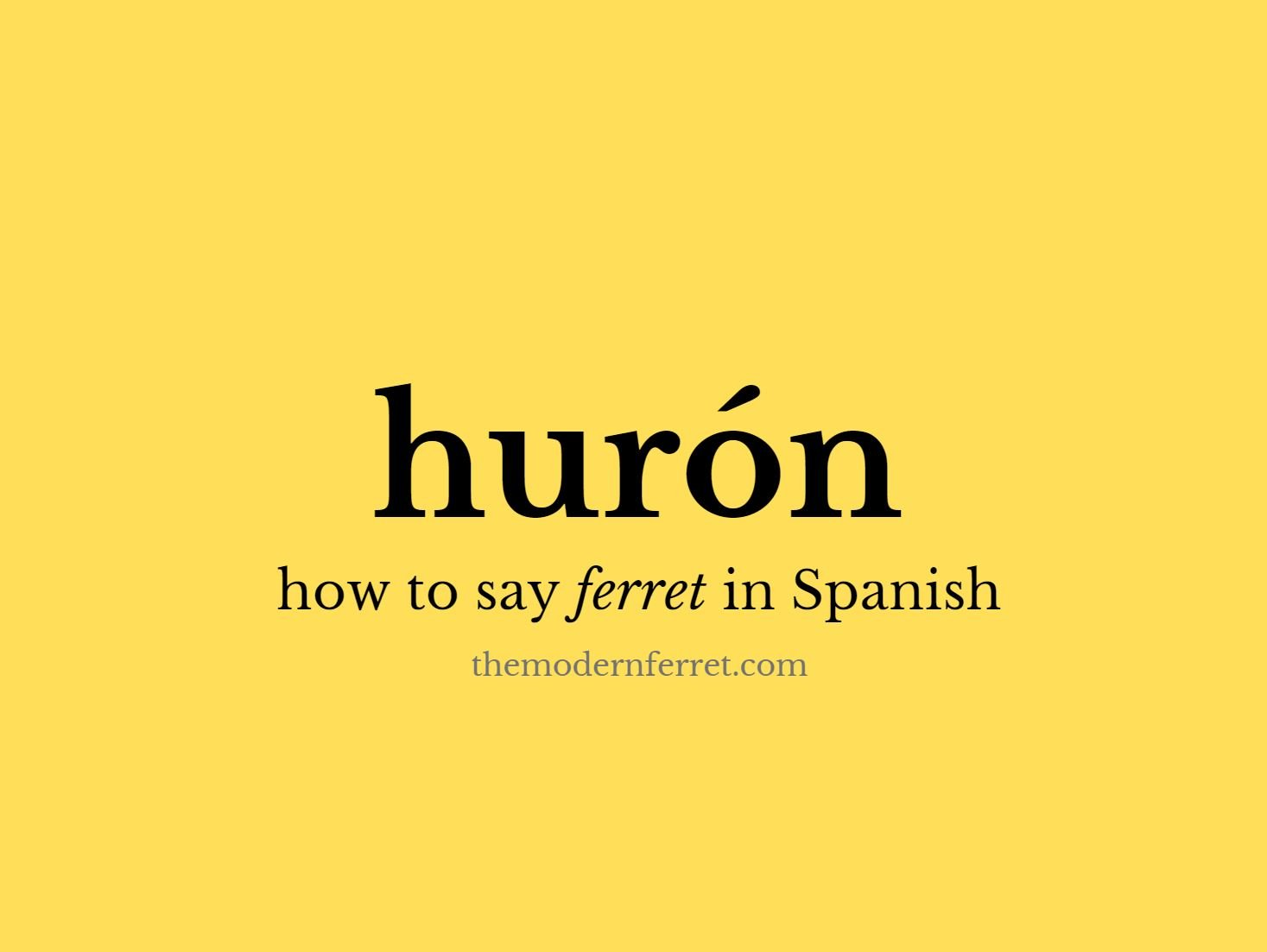 how to say ferret spanish