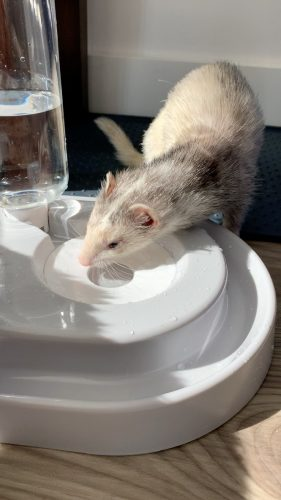 PREORDER: DUO // Splash-proof Ferret Food & Water Bowl photo review
