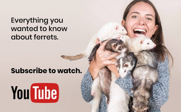 the-modern-ferret-subscribe-youtube